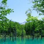 7月の北海道観光で女2人旅なら青い池は外せない