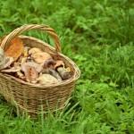 きのこの栄養素(食物繊維やビタミン類)を生かす調理方法と注意点