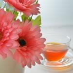ルイボスティーは奇跡のお茶その美肌効果とは?